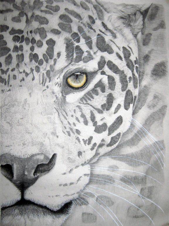 """Artist: Mayhem Mediums; Pencil, Drawing """"Jaguar graphite"""""""