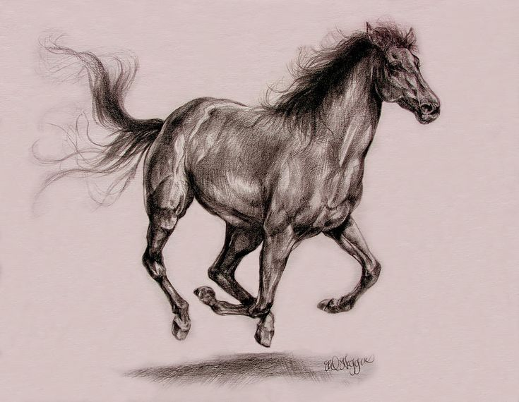Watch - Drawings Pencil of horses running video