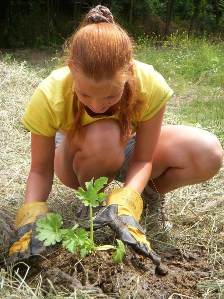 Polina planting the pumpkin