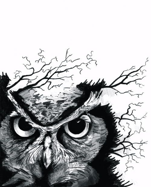 i love all things owl.