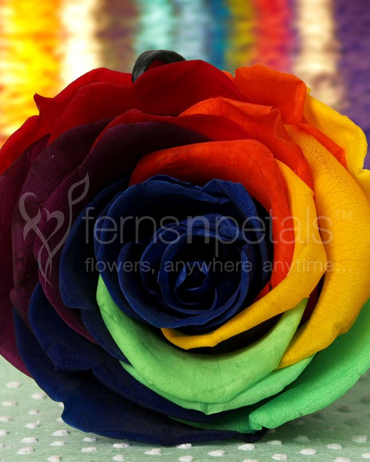 This #Valentines, create memories that never fade with this Forever #Rainbow #Rose.