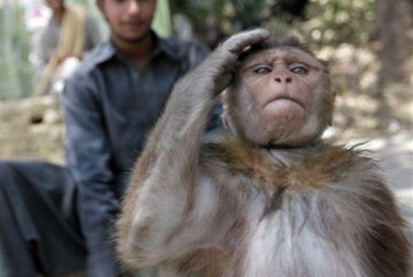 Kawanan monyet geruduk Pemkot Bandarlampung
