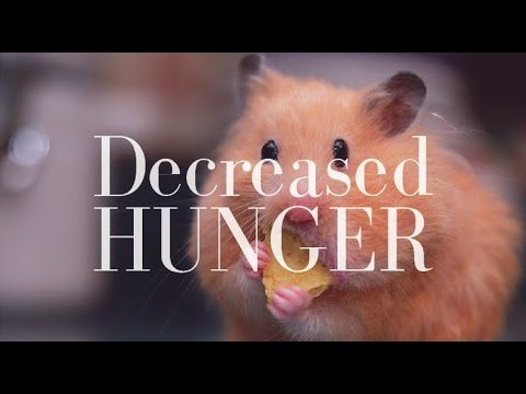 Decreased Hunger/Appetite/Cravings After ED Recovery