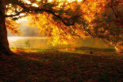 ✔ Banco de Imágenes Gratis: Paisaje de otoño junto al río - Amazing autumn landscape