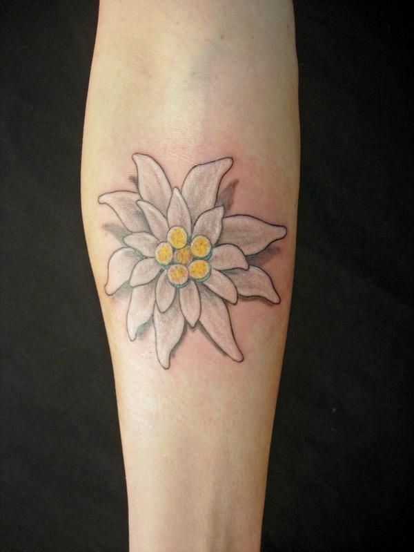 edelweiss tattoo (means courage and devotion)