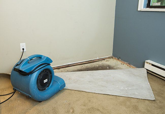 How To Get Mold Out Of Carpet How To Clean Carpet Carpet Cleaning Hacks Carpet Cleaning Solution