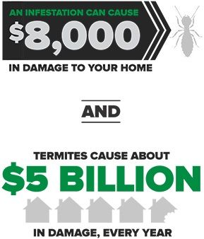 Cost of Termite Treatment Explained