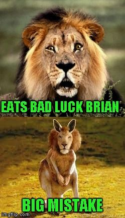 One does not simply eat Bad Luck Brian without dire consequences... | EATS BAD LUCK BRIAN BIG MISTAKE | image tagged in bad luck lion,memes,bad luck brian,funny,funny animals,lion kangaroo | made w/ Imgflip meme maker