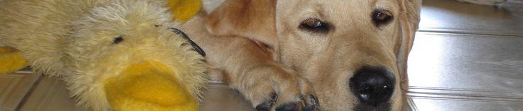 WORST DOG FOOD EXPLAINED – Bad Dog Food Ingredients –RECIPES 4 GOURMET DOGS