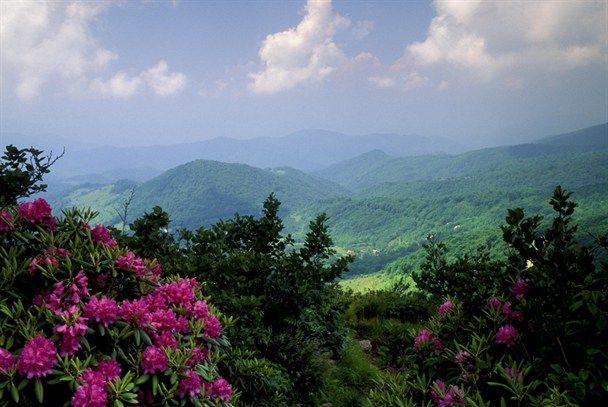 Rhododendron View: Gatlinburg Smoky Mountains, Great Smoky Mountains, Favorite Places, Beautiful, Gatlinburg Tennessee, Gatlinburg Tn, Smoky Mountains Gatlinburg, Smokey Mountains