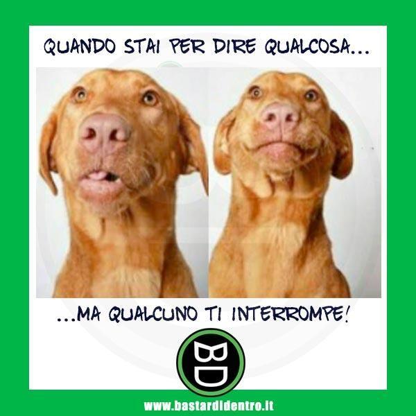 animali, cane, parole, interruzione, parlare