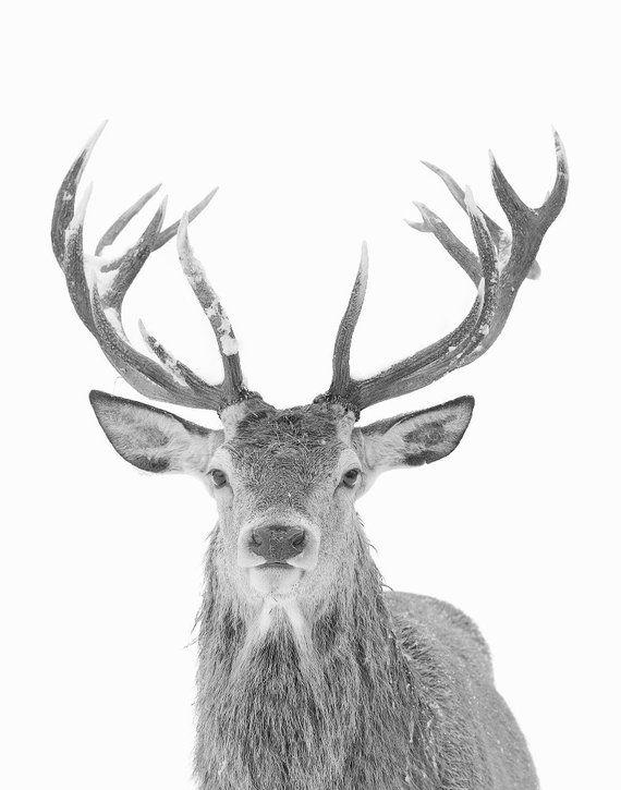 Deer Print Animal Art Large Wall Art Prints Deer Photography Etsy Deer Photography Art Deer Print