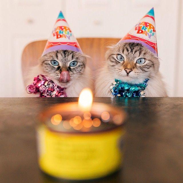 http://thefluffingtonpost.com/tagged/kitties