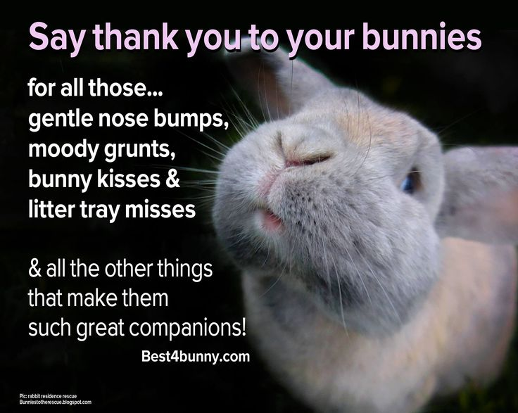 Thank you to bunnies everywhere - your all awesome!