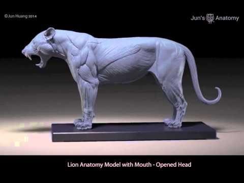 Jun's Anatomy Big Cats Anatomy models by Jun Huang —Kickstarter