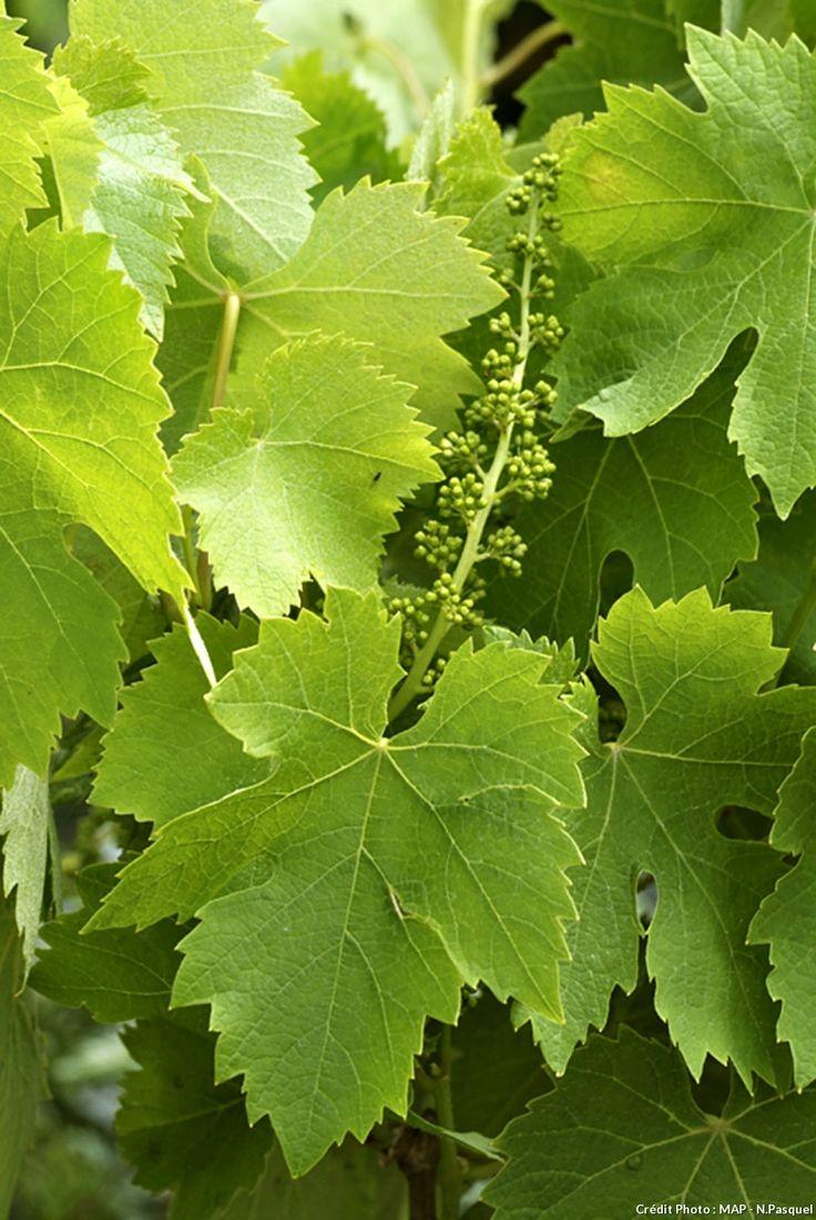En Champagne, la vigne en héritage : http://www.france3.fr/emissions/midi-en-france/chroniques/une-famille-dans-la-vigne-reims_438695