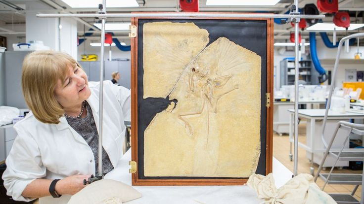 'Rock star' Archaeopteryx fossil heads for Japan - BBC News