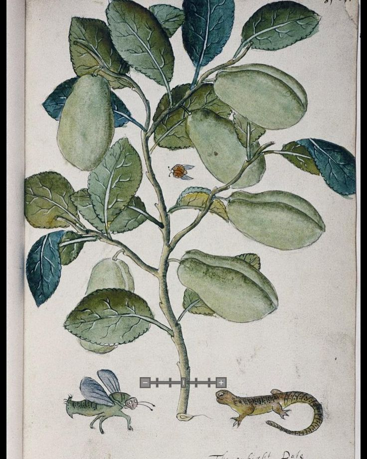 'The Tradescants' Orchard' 17th century on view at the Garden Museum with flying ladybird, a winged insect and a lizard. On loan from the Bodliean Library #botanical #plants #insects #plants