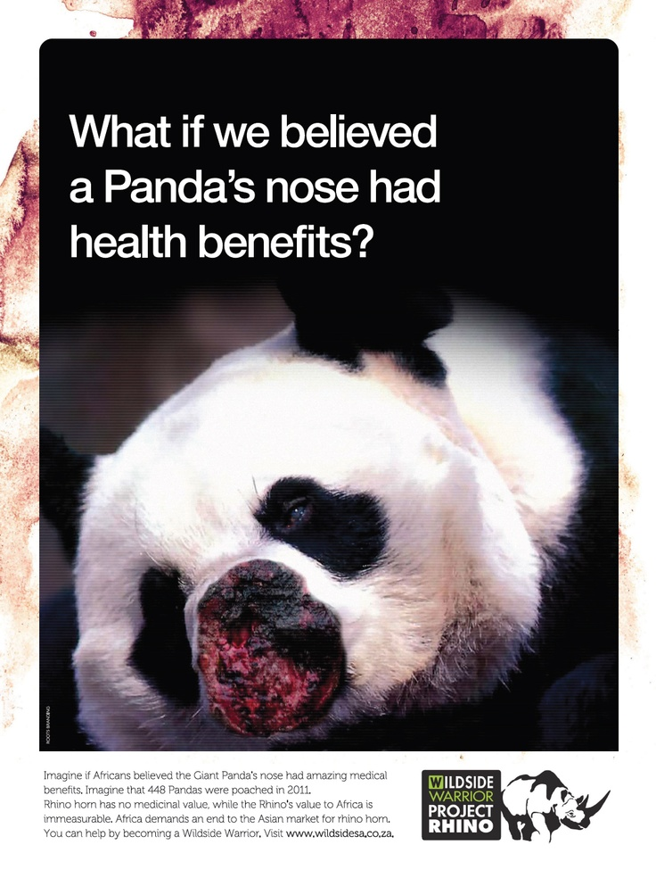 """giant pandas the possible end to The giant panda – an international symbol of wildlife conservation – is  that the  panda is at an """"evolutionary dead end,"""" destined for extinction."""