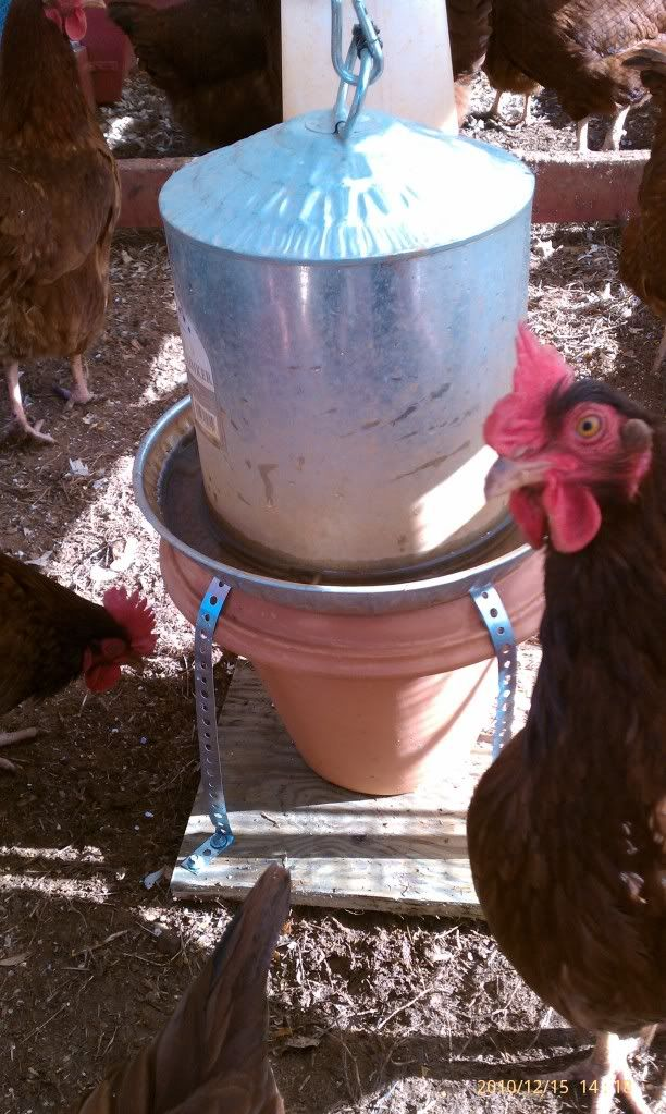 This chicken water heater keeps water from freezing so your flock is never thirsty! #backyardpoultrymag