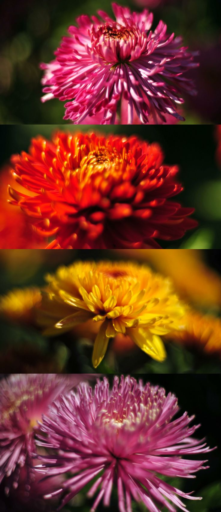 pictures, flowers, beautiful, desktop   Beautiful pictures ...