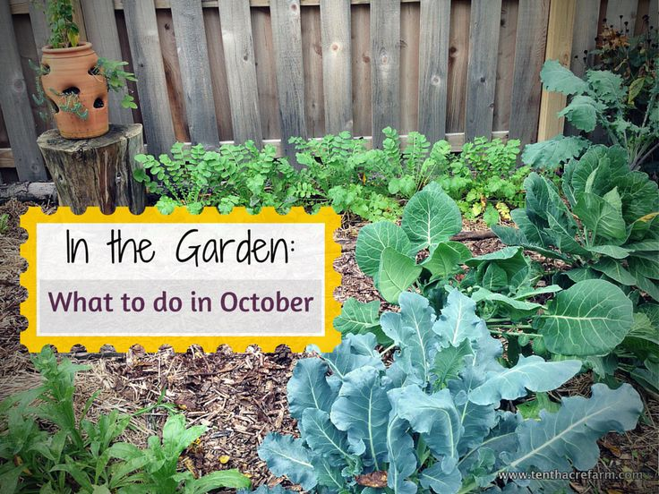 Fall Gardening Ideas Part - 43: 502 Best Garden Delights-Fall Gardening Images On Pinterest | Garden  Plants, Gardening Tips And Organic Gardening