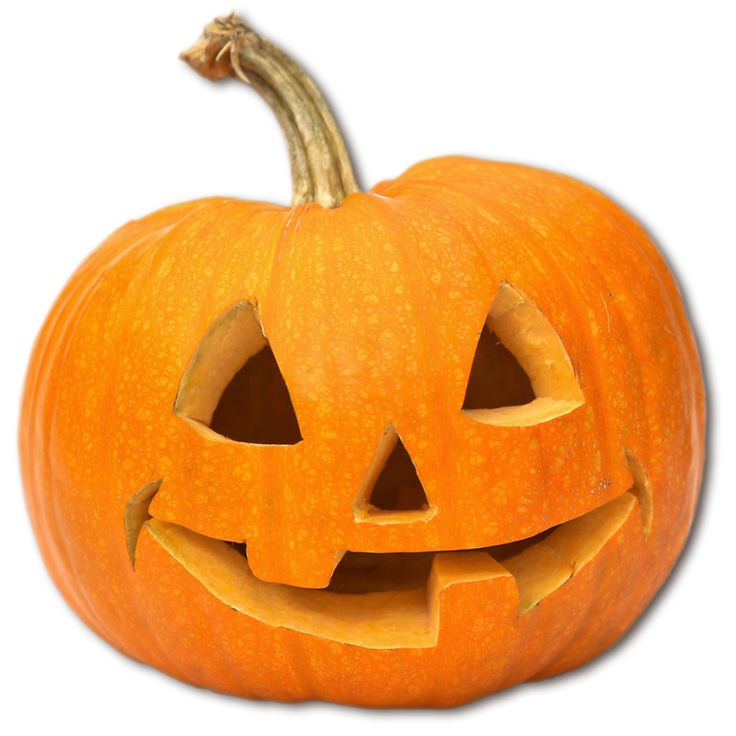 Best trick or treat images on pinterest halloween