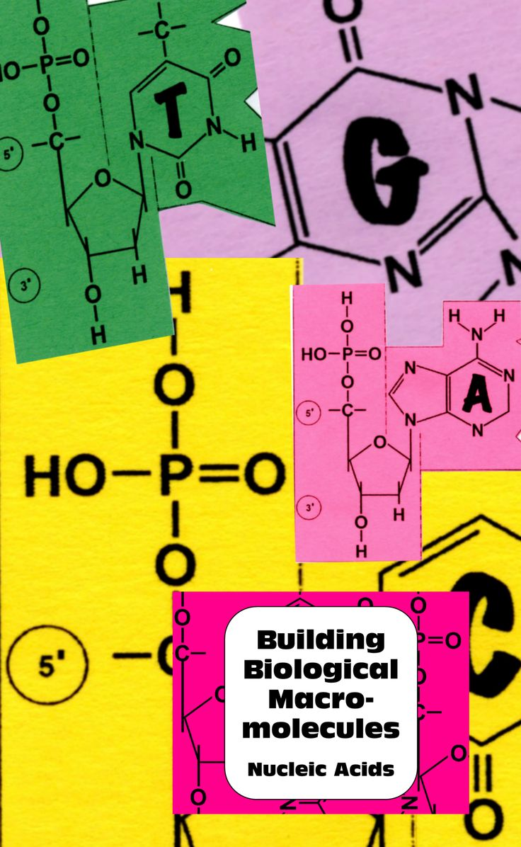 Senior & AP Biology classes: hands on activity for building biological molecules: DNA model with nucleotides. Guided research questions, nucleic acid structural formulas. Final product is an excellent individual study aid. Great for interactive notebooks.