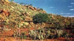 Sabana y Bosque Tropical Seco en América del Sur. Los problemas ambientales que pueden afectar a este bioma son incendios y la tala de árboles.