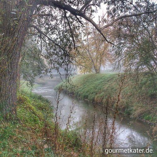 Fluß Fuhne #gourmetkater #nature #fall