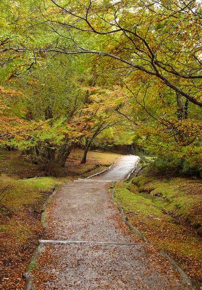 Tierra del Fuego National Park (Parque Nacional Tierra del Fuego) | Tierra del Fuego | Argentina