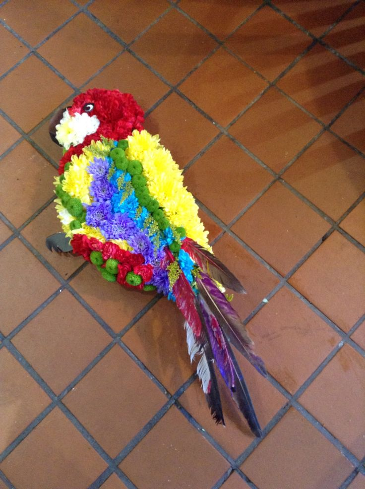 Parrot funeral tribute