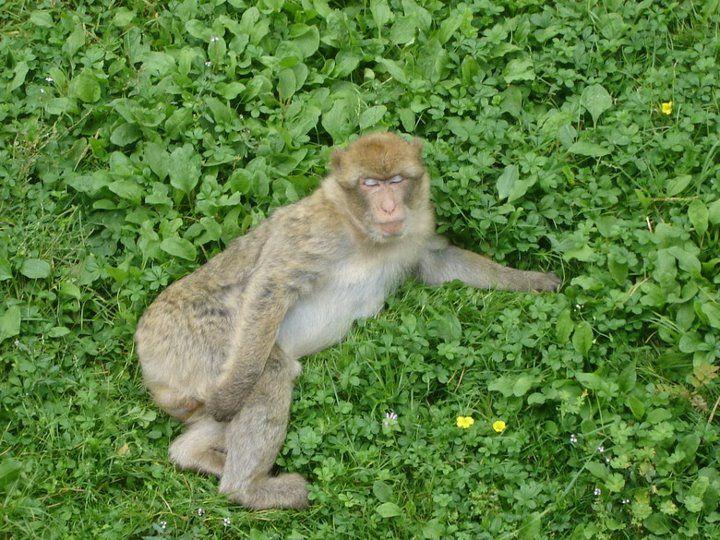 This monkey likes pose to the photo.