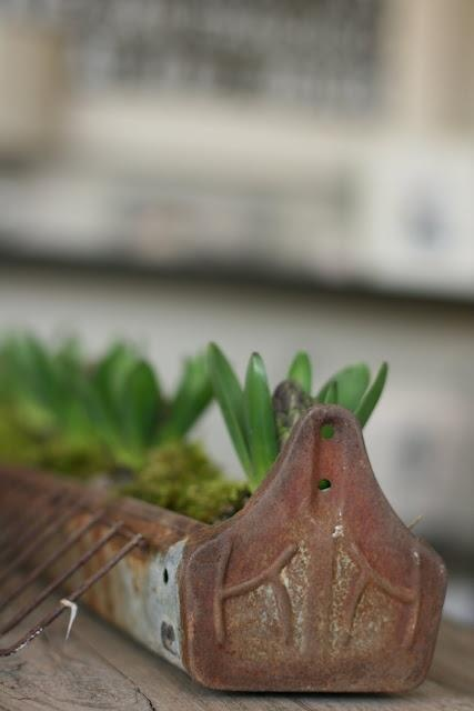 UPCYCLE - Turn an old rusted chicken feeder into a bulb planter.