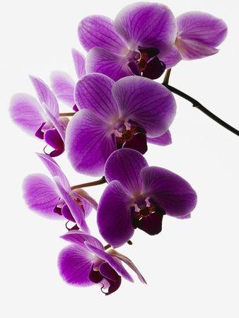 Deep purple flower , Wall Art and Home Décor at Art.com