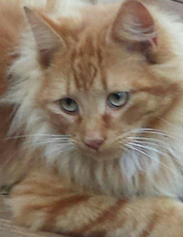 Meet Chessie Cat