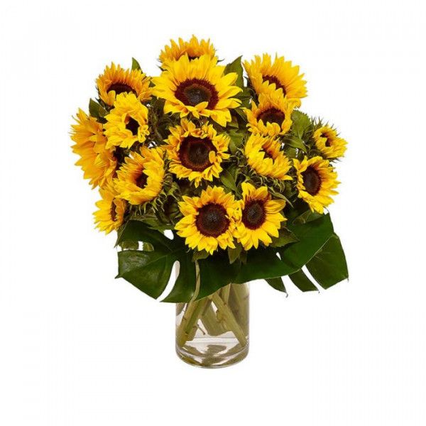 Sunflowers Sunflowers Symbolise Something New Just As A Sunrise Is The Start Of A Beautiful Day Order Flowers Online Flowers Australia Order Flowers