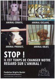 Evolution du statut juridique de l'animal dans le Code civil : pas une révolution pour les animaux ! | Fondation Brigitte Bardot
