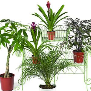 the six BEST houseplants to clean your home's air!