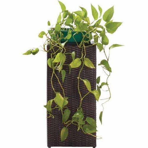 Tall Rattan Planters Aldi