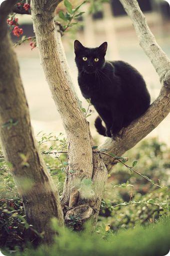 Fotos de gatos negros