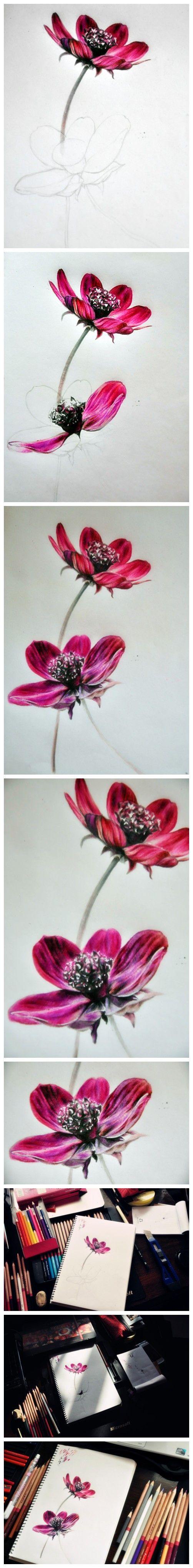 就是觉得这是一种很好看的花,所以就画了。后来查了一下才知道这个好像就是格桑花。