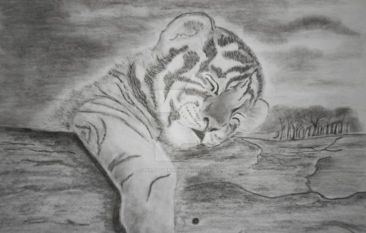Siberian Tiger Cub Drawing by ArtLover1980