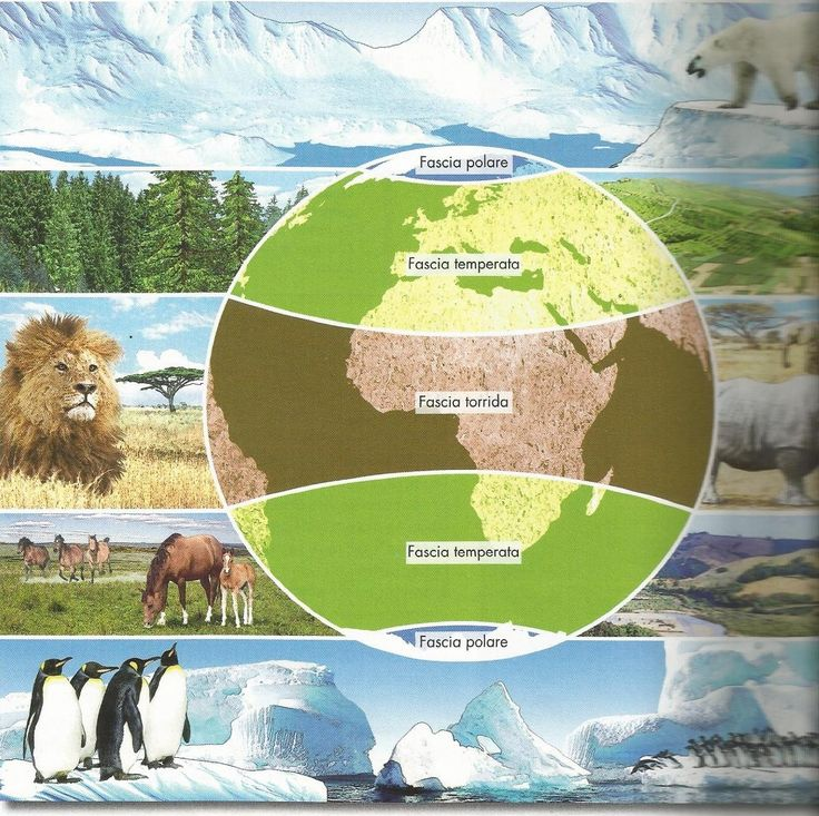 Fasce climatiche - ThingLink