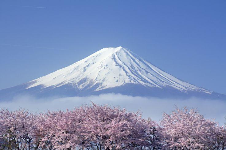 Sakura Mt Fuji