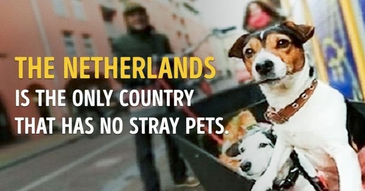 7 interesting facts that prove that the Netherlands is the country…