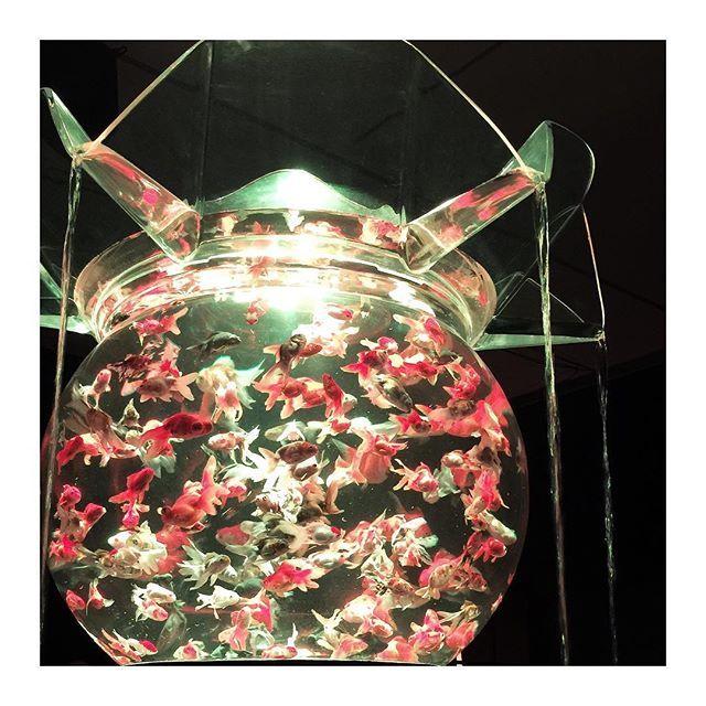 【rapetit_nail】さんのInstagramをピンしています。 《art aquarium *・゜゚  金沢 21世紀美術館🍁 #japan #ishikawa #kanazawa #artaquarium #artaquarium2016 #art #aquarium #日本 #石川県 #石川 #金沢市 #金沢 #21世紀美術館 #金沢21世紀美術館 #21美 #美術館 #美術館巡り #アートアクアリウム #アートアクアリウム2016 #アート #アクアリウム #芸術 #芸術の秋 #金魚 #和 #水槽 #巨大水槽 #美》