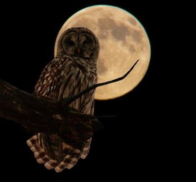 Who Who, it is an enchanted moon and owl