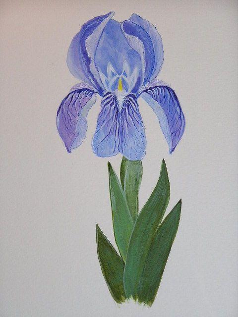 iris lutescens watercolor on paper june 2012