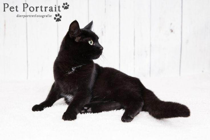 Kattenfotografie Oude Wetering - Fotoshoot voor twee katten-6